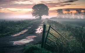 Picture road, nature, fog