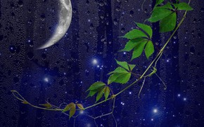 Picture moon, night, window, drops, darkness