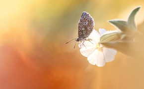 Picture white, flower, macro, light, butterfly, insect, orange background, bokeh