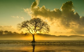 Picture TREE, The SKY, The SUN, CLOUDS, POND, CROWN
