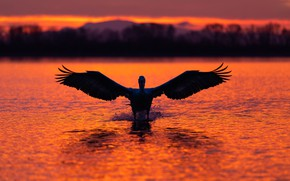 Picture light, sunset, mountains, bird, shore, wings, the evening, silhouette, pond, the scope, Pelican