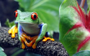 Picture toad, colors, look, green