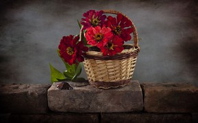 Picture flowers, basket, zinnia