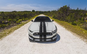 Wallpaper Mustang, Ford, Shelby, Ford Mustang, GT350, Ford Mustang Shelby GT350, Shelby GT350