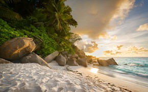 Picture sea, landscape, sunset, tropics, palm trees, coast