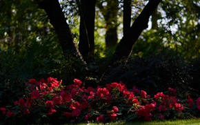 Picture greens, summer, light, trees, flowers, Park, thickets, trunks, shadow, red, flowerbed, al, the bushes, bokeh, ...