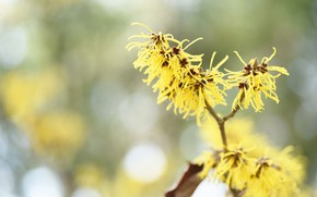 Picture flowers, sprig, background, bokeh, yellow flowers