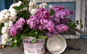 Picture bouquet, lilac, summer.