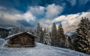 Picture winter, forest, house