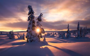 Picture winter, the sun, rays, snow, trees, landscape, nature, morning, ate, Jørn Allan Pedersen