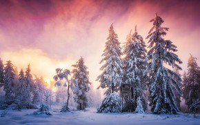 Picture winter, frost, forest, the sky, clouds, snow, landscape, fog, winter, ate, pink, haze, booth, wooden, …