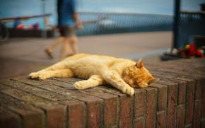 Picture cat, cat, the city, people, stay, street, sleep, red, port, sleeping, lies, bricks, promenade, city, …
