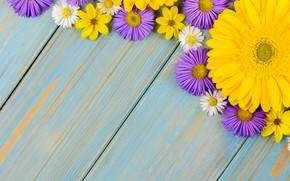 Picture flowers, background, blue, chamomile, gerbera, yellow, wood, blue, flowers, garden, purple, gerbera