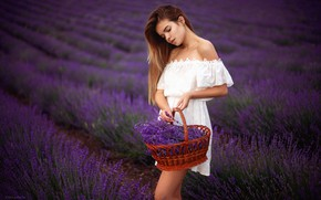 Picture field, girl, flowers, pose, dress, basket, lavender, Denis Lankin
