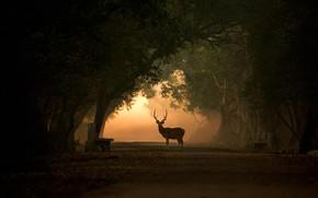 Picture Park, deer, India, silhouette, horns, alley, Aksis, Keoladeo Ghana