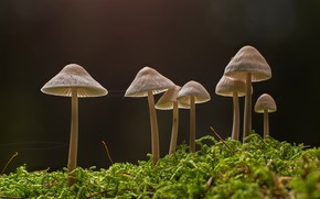 Picture forest, mushrooms, moss, baby
