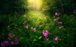 Picture greens, forest, flowers, thickets, pink, fern