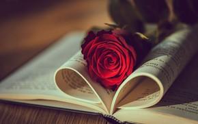Picture light, rose, book, bokeh, Natasha Busel