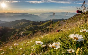 Picture grass, the sun, flowers, mountains, view, height, chamomile, slope, spikelets