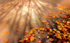 Picture road, autumn, asphalt, leaves, light, mood, branch, foliage, beauty, yellow, shadows, placer, orange, falling leaves, …