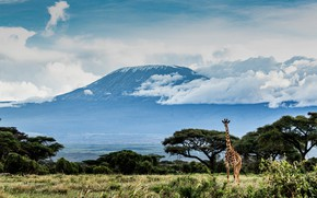 Picture field, the sky, grass, clouds, trees, mountains, blue, blue, the volcano, giraffe, Africa