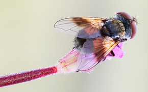 Picture flower, macro, fly, background, stem, insect, brown, fly