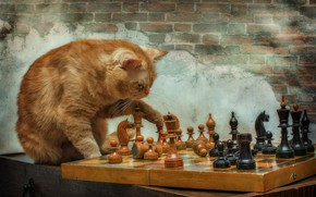 Picture the game, chess, Kote, red cat, grandmaster