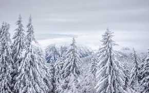 Picture winter, frost, forest, the sky, clouds, snow, trees, mountains, fog, rocks, tops, view, height, beauty, …