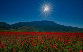 Picture summer, the sky, the sun, flowers, blue, Maki, blue sky, poppy field