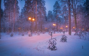 Picture winter, snow, trees, landscape, nature, Park, lights, twilight, alley
