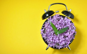 Picture flowers, yellow, background, arrows, watch, minimalism, petals, alarm clock, leaves, dial, lilac