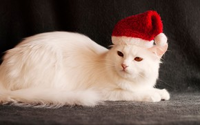 Picture cat, the dark background, holiday, new year, Christmas, white, image, Santa Claus, Santa, cap