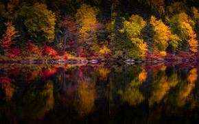 Picture autumn, forest, trees, lake, reflection, shore, dark water, pond, the colors of autumn, mirror, autumn …