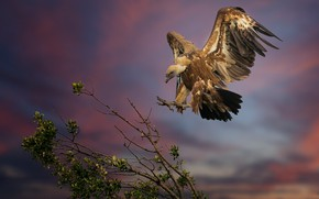 Picture the sky, branches, tree, bird, wings, feathers, Grif, Griffon vulture, падальщик