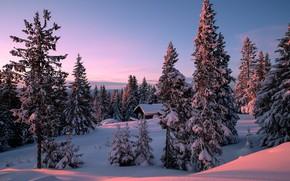 Picture winter, forest, the sun, hill, Allan Pedersen