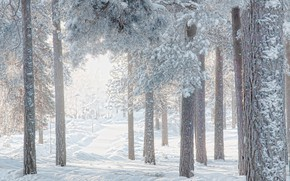 Picture winter, forest, snow, branches, pine
