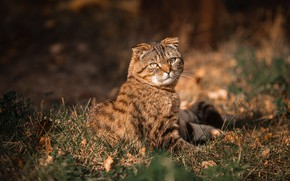 Picture cat, look, light, nature, fold, sitting