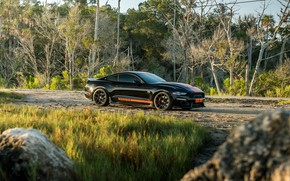 Picture Mustang, Ford, Shelby, GT-S, 2019