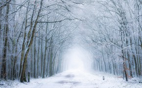 Picture winter, road, forest, fog