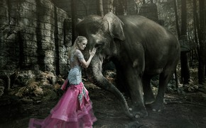 Picture elephant, the situation, girl