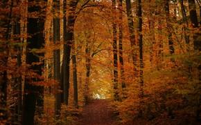 Wallpaper autumn, forest, track, November