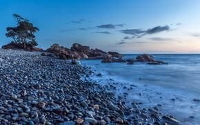 Picture sea, the sky, blue, stones, tree, coast, New Zealand, horizon, Waikawau Bay