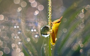 Picture water, drops, macro, light, yellow, Rosa, glare, lights, drop, small, grasshopper, a blade of grass, …