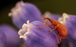 Picture macro, flowers, beetle, spring