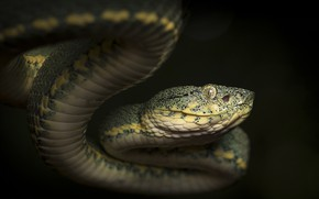 Picture look, nature, snake, reptile, cold-blooded animal