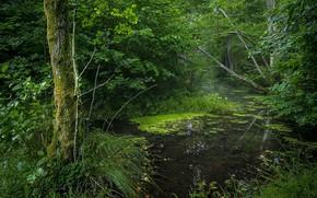 Picture greens, landscape, nature, lake, beauty, plants