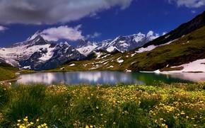 Picture flowers, mountains, lake, Switzerland, Switzerland, Bernese Alps, The Bernese Alps, Bernese Oberland, Bachalpsee Lake, Lake …
