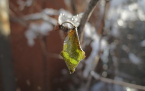 Picture ice, winter, leaves, snow