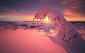Picture winter, the sun, rays, snow, trees, landscape, sunset, nature, ate, The white sea, The Arctic, …