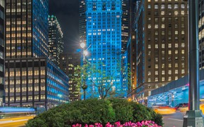 Picture flowers, street, building, New York, Manhattan, tulips, flowerbed, Manhattan, New York City, Helmsley Building, Park …